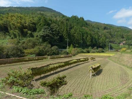 内子町 稲木風景 3