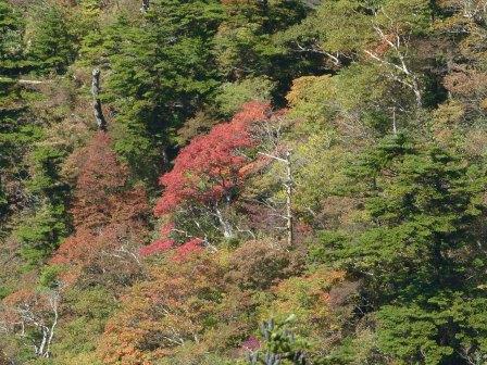 瓶ヶ森林道 紅葉 6