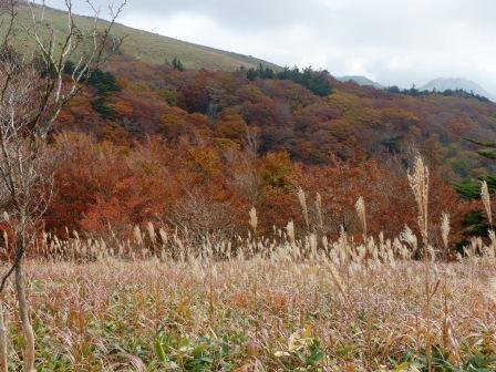 大川嶺周辺 紅葉 1