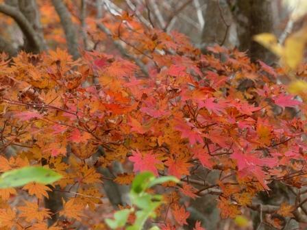 大川嶺周辺 紅葉 3