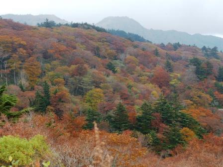 大川嶺周辺 紅葉 4
