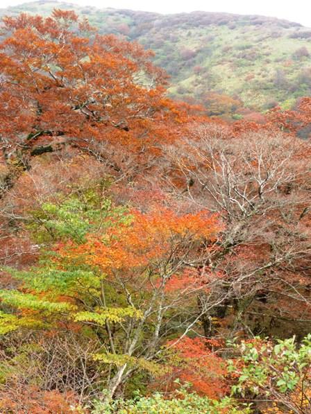 大川嶺周辺 紅葉 5