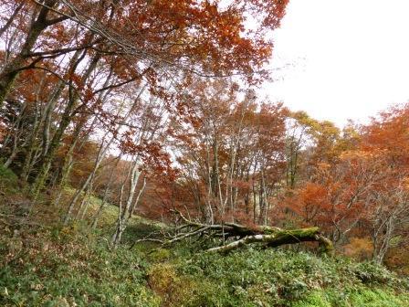 大川嶺周辺 紅葉 7