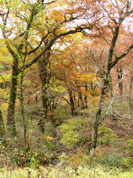 大川嶺周辺 紅葉 8