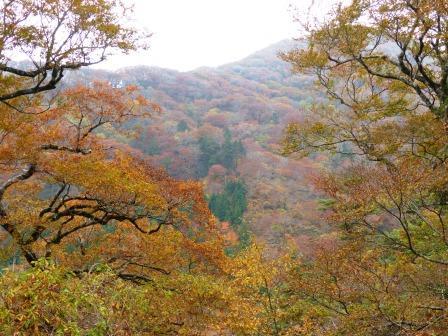 大川嶺周辺 紅葉 11