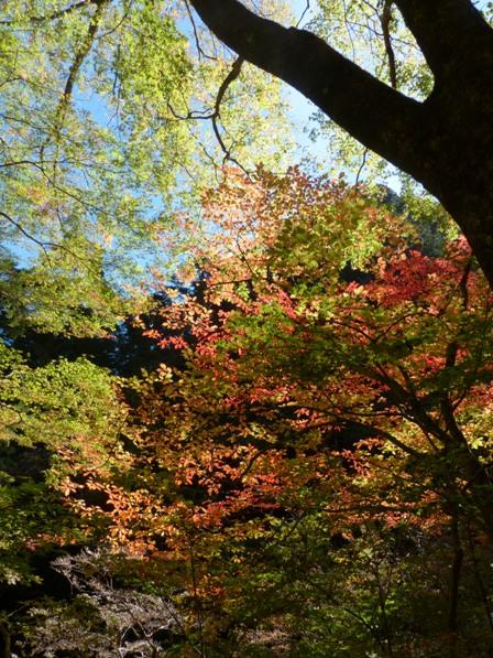小田深山渓谷 紅葉 5