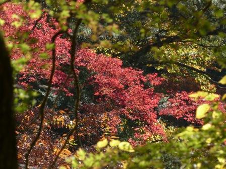 小田深山渓谷 紅葉 4