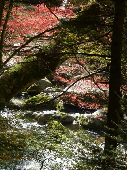 小田深山渓谷 紅葉 7