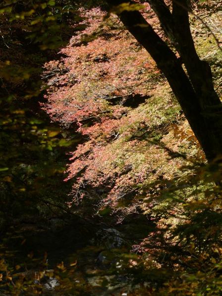 小田深山渓谷 紅葉 8