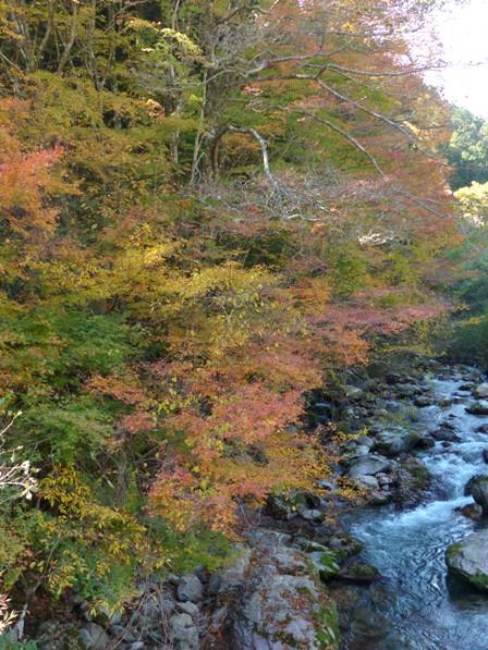 小田深山渓谷 紅葉 10