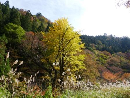 小田深山渓谷 紅葉 13