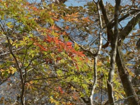 四国カルスト・セラピーロードの紅葉 1