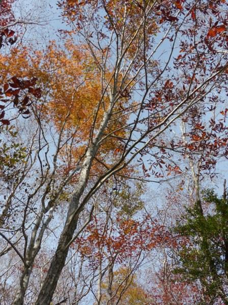 四国カルスト・セラピーロードの紅葉 4