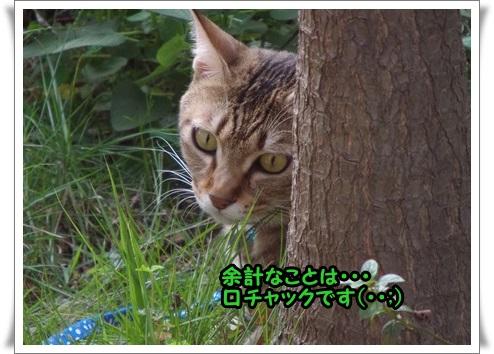 IMGP9814.jpg
