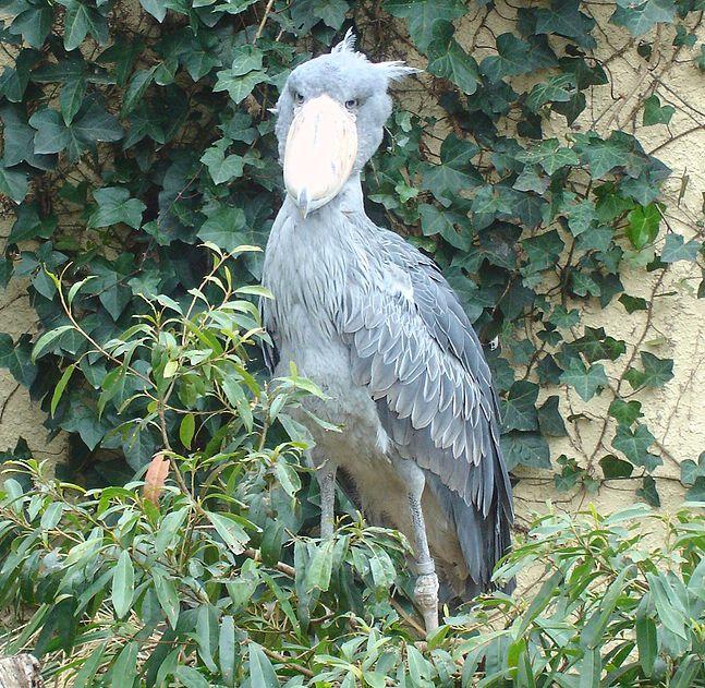 羽のない鳥は致命的な欠陥