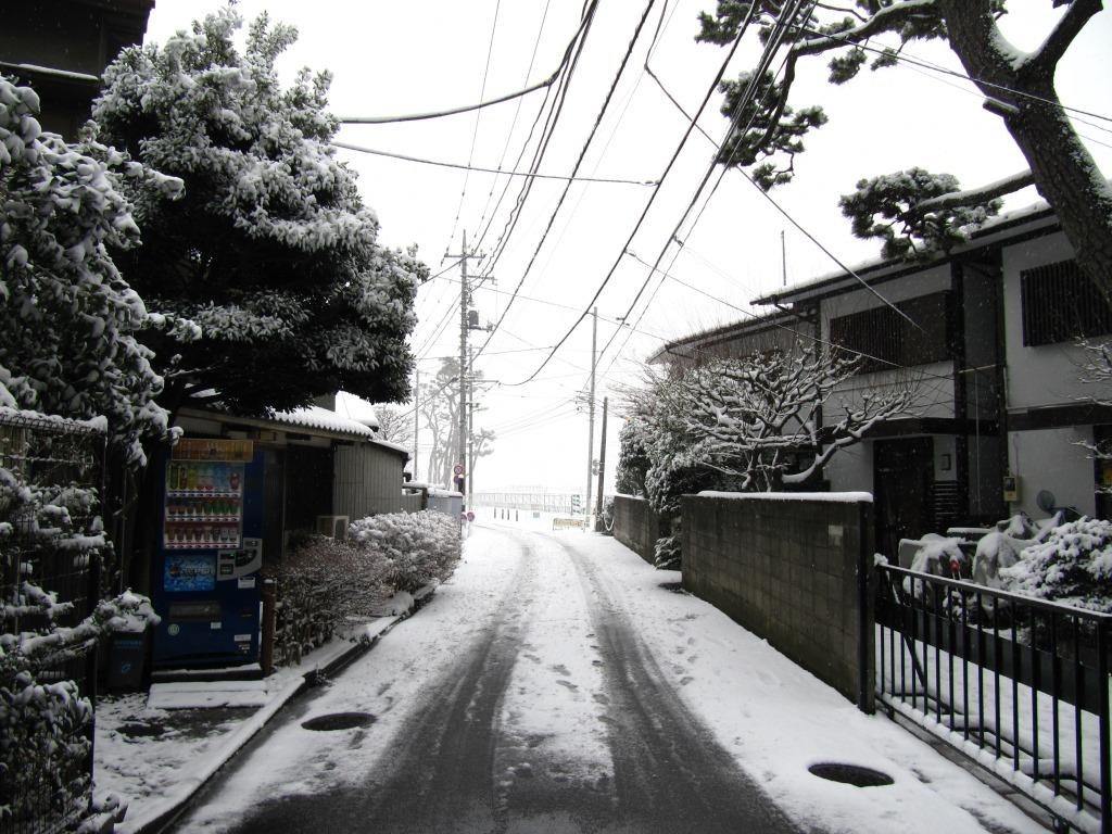 雪の散歩 (15)