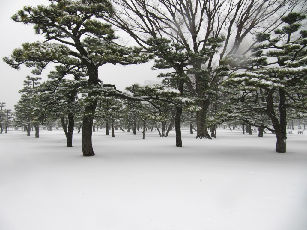 雪の散歩 (20)