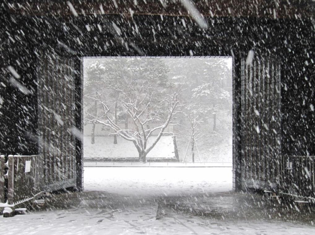 雪の散歩 (38)