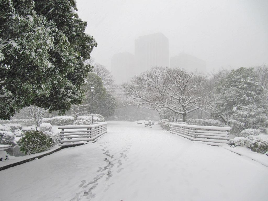 雪の散歩 (51)