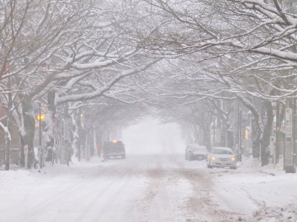 雪の散歩 (62)