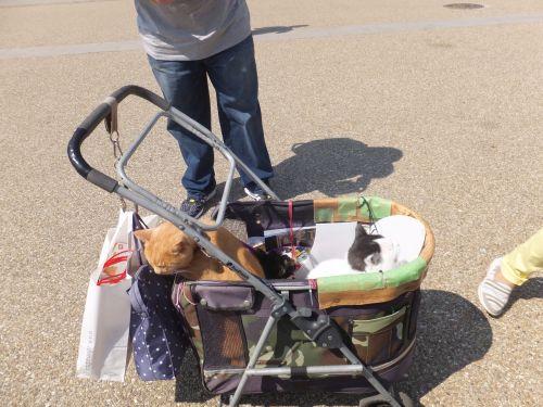 猫と乳母車DSCF2677