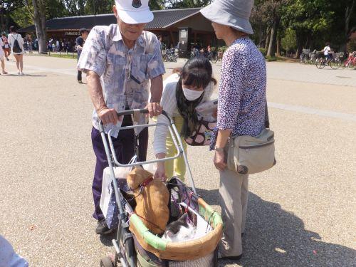 ねこ3匹とおじいちゃんと乳母車DSCF2679