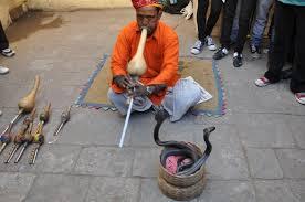 インド 蛇