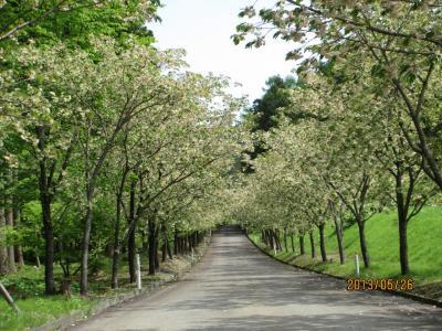 ②黄桜ロード