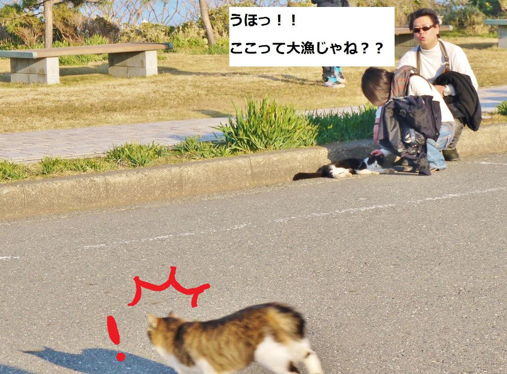 P1070792_1.jpg