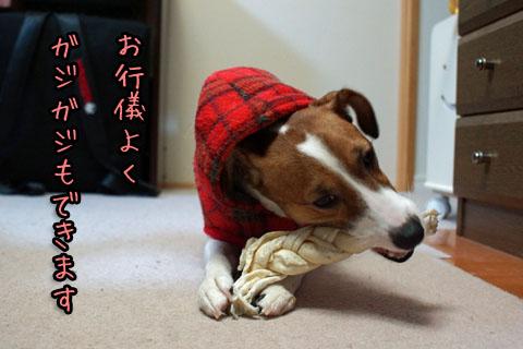 シオンお行儀よく2013 12 18_6896