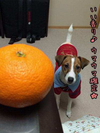 シオンいい香り2013 12 29_6976