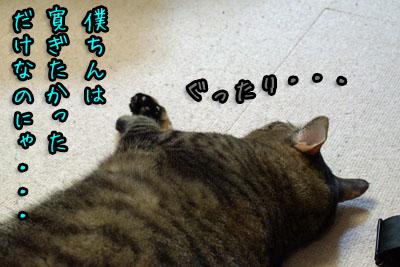 トラぐったり2013 12 18_6908