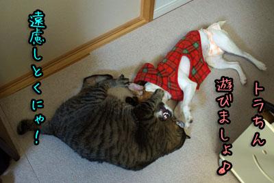 シオントラ遊ぼ2013 12 18_6907