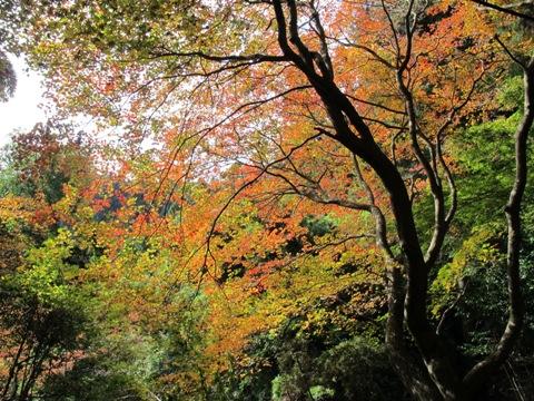 櫛田・南山城 151