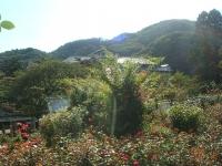 2014-09-21薔薇-075