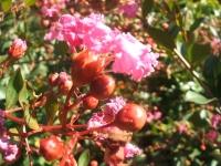 2014-09-21薔薇-122