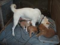 シロの子犬達018