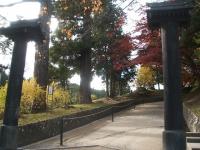 中尊寺リハビリの菊祭り&紅葉2014-11-10-005