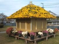 中尊寺リハビリの菊祭り&紅葉2014-11-10-001
