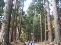 中尊寺リハビリの菊祭り&紅葉2014-11-10-012