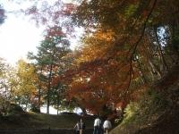 中尊寺リハビリの菊祭り&紅葉2014-11-10-008