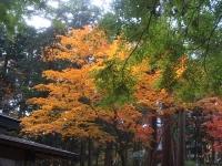 中尊寺リハビリの菊祭り&紅葉2014-11-10-018