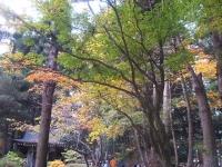 中尊寺リハビリの菊祭り&紅葉2014-11-10-016