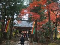 中尊寺リハビリの菊祭り&紅葉2014-11-10-022