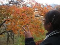 中尊寺リハビリの菊祭り&紅葉2014-11-10-032