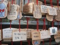 中尊寺リハビリの菊祭り&紅葉2014-11-10-029