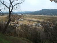 中尊寺リハビリの菊祭り&紅葉2014-11-10-038