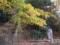中尊寺リハビリの菊祭り&紅葉2014-11-10-037