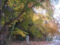 中尊寺リハビリの菊祭り&紅葉2014-11-10-036