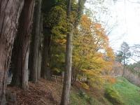 中尊寺リハビリの菊祭り&紅葉2014-11-10-034